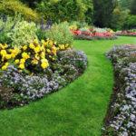 De Plant Technicus - wortels - verplanten