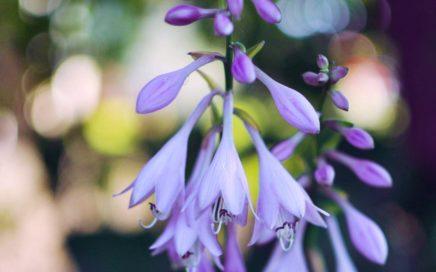 De Plant Technicus Hoveniersbedrijf - tuinonderhoud tuin