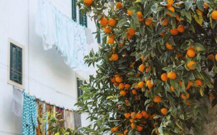 Fruitbomen onderhoud en snoeien - de plant technicus (2)