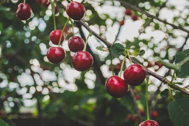 Fruitbomen onderhoud en snoeien - de plant technicus (5)