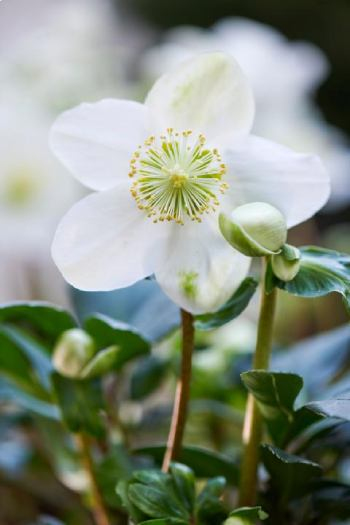De Plant Technicus - Winterbloeier
