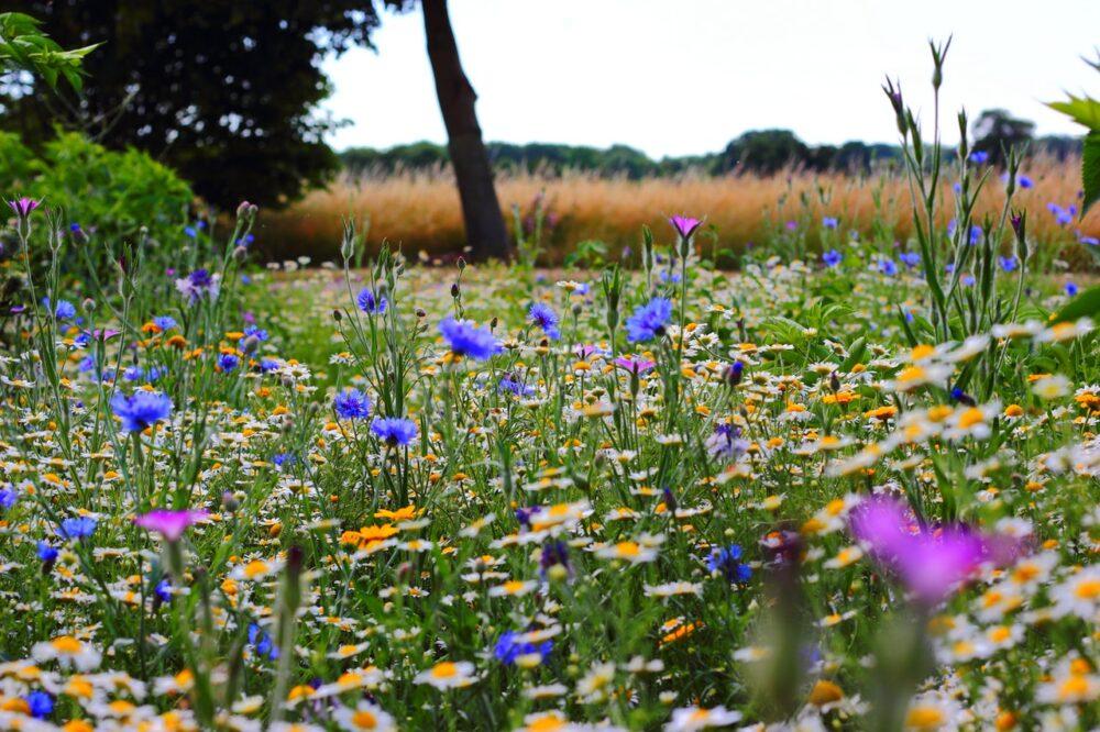 Biodiverse beplanting – de plant technicus