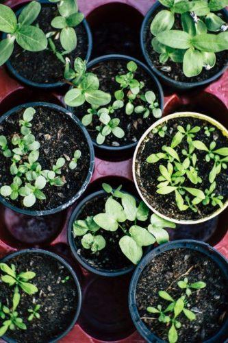 De Plant Technicus Hoveniersbedrijf - Voorjaarsbeurt tuin tuinonderhoud
