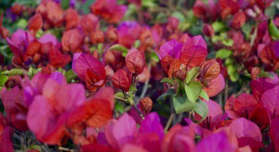 beautiful-flowers-bloom-blooming-165897