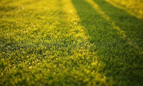 blur-close-up-depth-of-field-572007